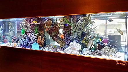Custom Aquariums aquaticaus